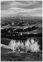 Monument Basin from Grand view point, Island in the sky. Canyonlands National Park, Utah, USA. (black and white)