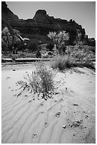 Sand ripples and animal tracks, Maze District. Canyonlands National Park, Utah, USA. (black and white)