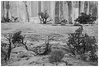 Junipers and rock walls, the Maze. Canyonlands National Park, Utah, USA. (black and white)