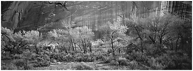 Sagebrush, trees and cliffs with desert varnish. Capitol Reef National Park, Utah, USA. (black and white)