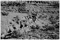 Junipers and red Moenkopi Formation sandstone. Capitol Reef National Park, Utah, USA. (black and white)