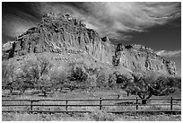 Historic orchard and cliff in autumn, Fruita. Capitol Reef National Park, Utah, USA. (black and white)