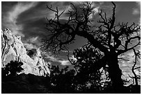 Silhouetted juniper and cliff. Capitol Reef National Park, Utah, USA. (black and white)