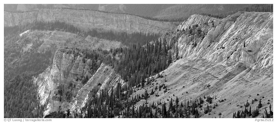 Limestone cliffs. Great Basin National Park (black and white)