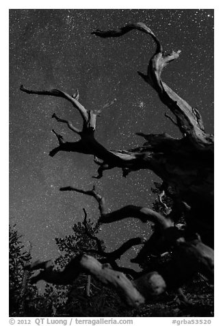 Twisted branches of bristlecone pine and stars. Great Basin National Park (black and white)