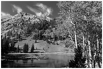 Aspen and Stella Lake. Great Basin National Park ( black and white)