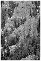 Limestone towers and pine trees near Lexington Arch. Great Basin National Park ( black and white)