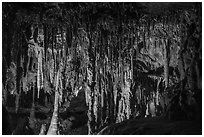 Delicate Stalactites and Stalagmites, the Swamp, Lehman Cave. Great Basin National Park ( black and white)