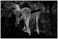 Parachute Shields in Grand Palace, Lehman Cave. Great Basin National Park ( black and white)