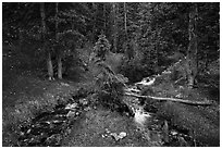 High elevation creek in summer. Great Basin National Park ( black and white)