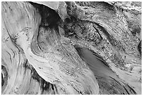 Detail of Bristlecone pine roots. Great Basin National Park ( black and white)