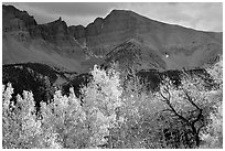 Aspens in fall foliage and Wheeler Peak. Great Basin National Park, Nevada, USA. (black and white)