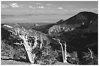Bristlecone pine trees and Pole Canyon, afternoon. Great Basin National Park ( black and white)