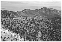 Mountains covered with Bristlecone Pines near Mt Washington, morning. Great Basin National Park ( black and white)