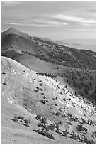 Bristlecone Pine trees and multi-hued peaks, Snake range seen from Mt Washington, morning. Great Basin National Park ( black and white)