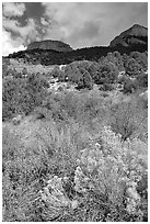 Sage in bloom and Snake Range. Great Basin National Park ( black and white)