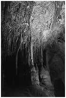 Soda Straws formations in Lehman Cave. Great Basin National Park, Nevada, USA. (black and white)