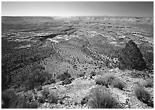 The Esplanade from the North Rim, morning. Grand Canyon  National Park ( black and white)