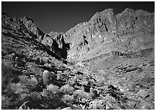 Barrel cactus and Redwall from below. Grand Canyon  National Park ( black and white)