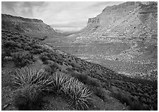 Havasu Canyon, afternoon. Grand Canyon  National Park ( black and white)