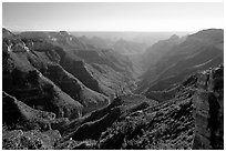 Lush side canyon, North Rim. Grand Canyon National Park ( black and white)