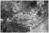 Gorge and riparian environment, Clear Creek. Grand Canyon National Park ( black and white)