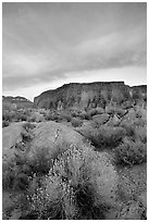 Sage flowers, wall, and cloud, Surprise Valley, sunset. Grand Canyon National Park, Arizona, USA. (black and white)