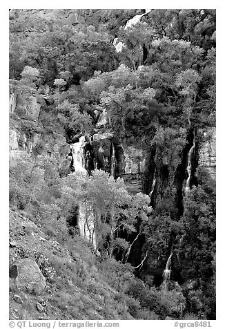 Trees and Thunder River lower waterfall. Grand Canyon National Park (black and white)