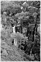 Trees and Thunder River lower waterfall. Grand Canyon National Park ( black and white)