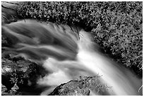Thunder River stream with red flowers. Grand Canyon National Park, Arizona, USA. (black and white)