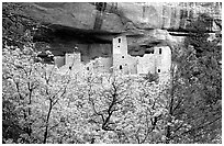 Trees and Cliff Palace, morning. Mesa Verde National Park, Colorado, USA. (black and white)