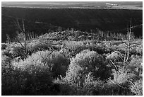 Trees, shrubs, and cliff shadow, early morning. Mesa Verde National Park, Colorado, USA. (black and white)