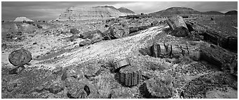Colorful sections of petrified wood. Petrified Forest National Park (Panoramic black and white)