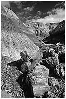 Colorful fossilized logs in Blue Mesa, afternoon. Petrified Forest National Park ( black and white)