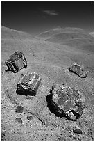 Petrified wood on red badlands,. Petrified Forest National Park ( black and white)