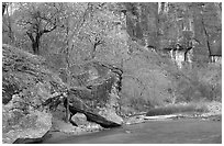 Virgin river at  entrance of the Narrows. Zion National Park, Utah, USA. (black and white)