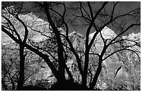 Canyon walls seen through bare trees, Zion Canyon. Zion National Park, Utah, USA. (black and white)
