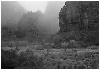 Rainy afternoon, Zion Canyon. Zion National Park, Utah, USA. (black and white)