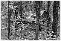 Abandoned historical log cabin, Middle Fork of Taylor Creek. Zion National Park ( black and white)