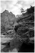 Left Fork of the North Creek. Zion National Park, Utah, USA. (black and white)