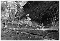 Cascade and alcove, Left Fork of the North Creek. Zion National Park, Utah, USA. (black and white)