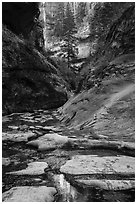 Stream and canyon walls, Left Fork. Zion National Park ( black and white)