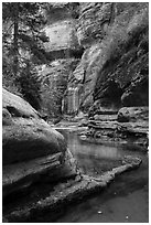 Emerald waters and canyon walls along Left Fork. Zion National Park ( black and white)
