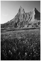 Sunflowers and pointed pinnacles at sunset. Badlands National Park ( black and white)