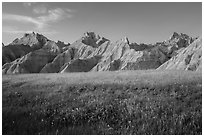 Grasses with summer flowers and buttes at sunset. Badlands National Park ( black and white)