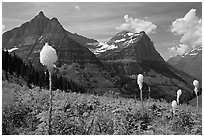 Beargrass, Mt Oberlin and Cannon Mountain. Glacier National Park, Montana, USA. (black and white)