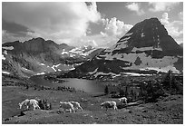 Mountain goats, Hidden lake and peak. Glacier National Park, Montana, USA. (black and white)