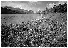 Wildflowers on shore of Sherburne Lake. Glacier National Park, Montana, USA. (black and white)