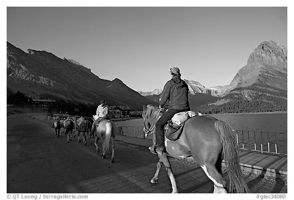 Horses on the shores of Swiftcurrent Lake, sunrise. Glacier National Park, Montana, USA.