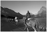 Horses on the shores of Swiftcurrent Lake, sunrise. Glacier National Park, Montana, USA. (black and white)